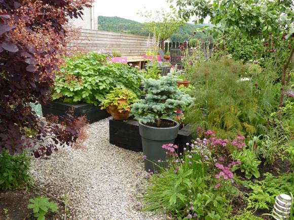 The Vialii home allotment, hidden in a corner of our garden