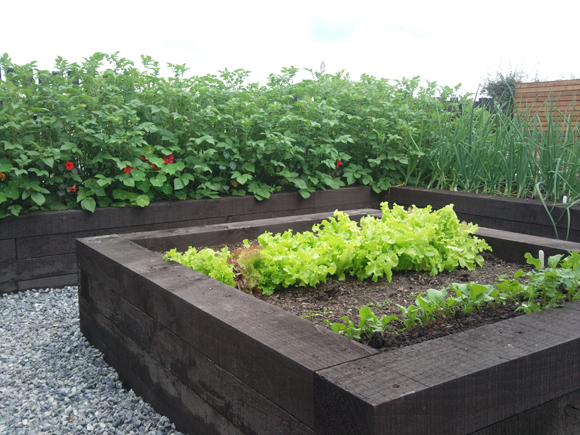 Our raised beds are easy to tend as we can sit while we work