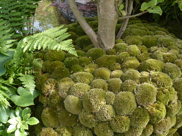 Moss balls in the Japanese garden