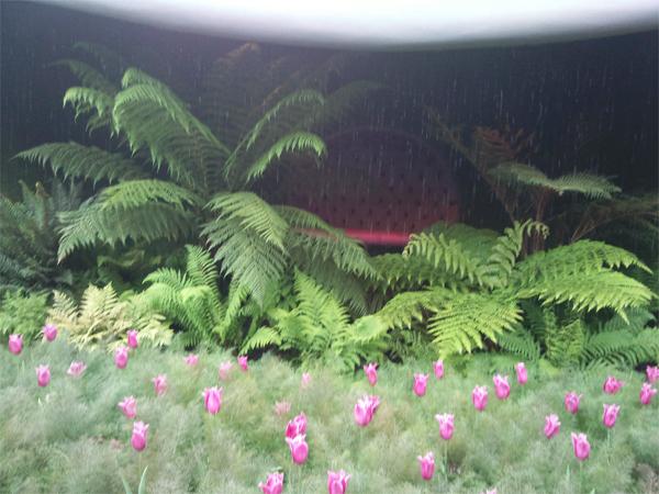 The Urban Plantaholics Kitchen Garden