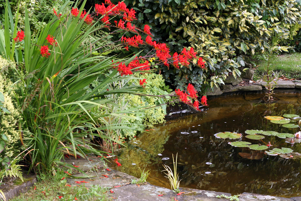 Make your pond safe for little ones in your garden