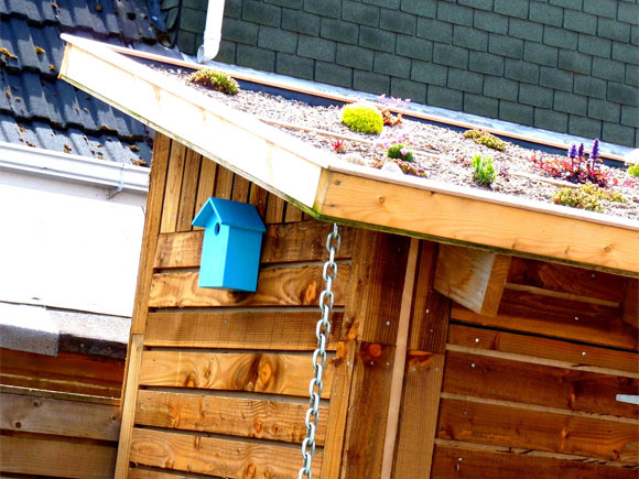 Our shed with its green roof