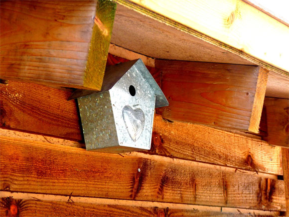 A cute bird box