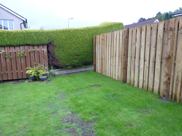 Before: the garden was boggy and lacked interest