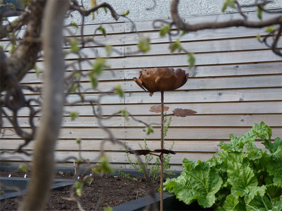 Herbaceous planting will envelop this rusty rose so that it pops out of the border
