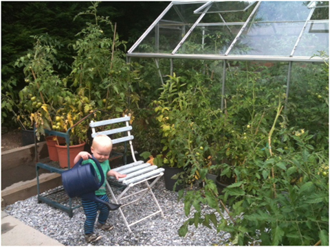 Euan knows it's very important to keep your (98!) tomato plants  well watered!