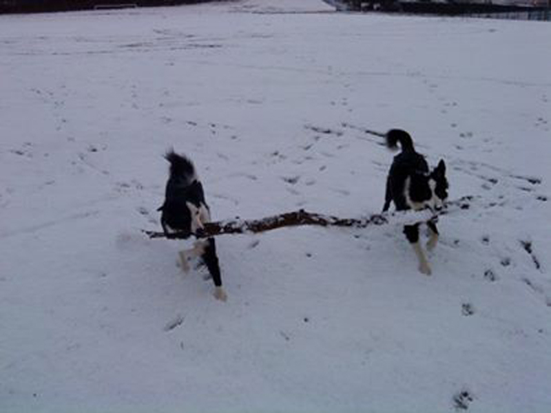 "Gabi & Zara show good team work bringing their ""stick"" home"