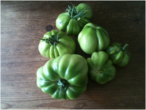 Cuore di bue beefsteak tomatoes. Later ripening so not the best for northern gardens but good for bulking out green tomato chutney.