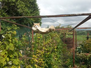 """Leo finds a comfy """"hammock"""" in the sun"""