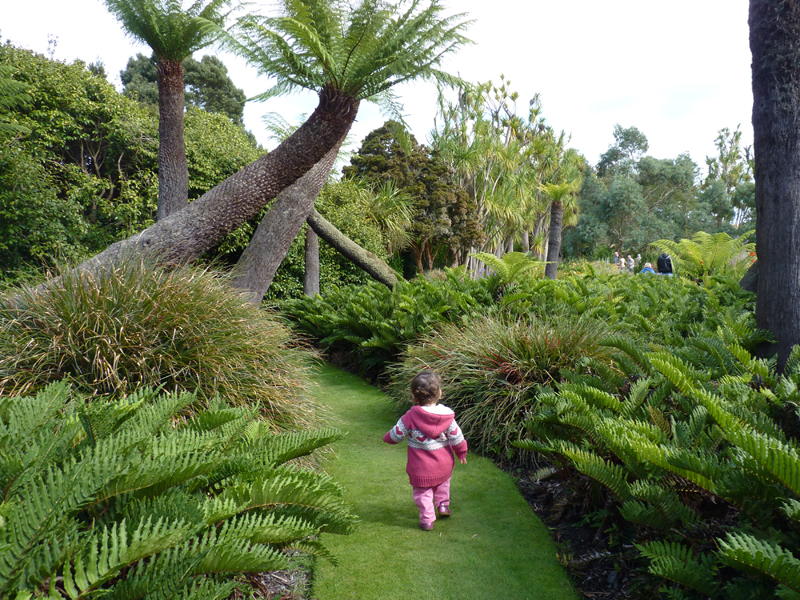 Tree ferns are one of the main features of Logan Botanic Garden