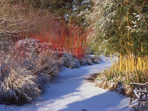 Plants for a winter border