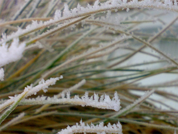 Grasses look wonderful covered in frost