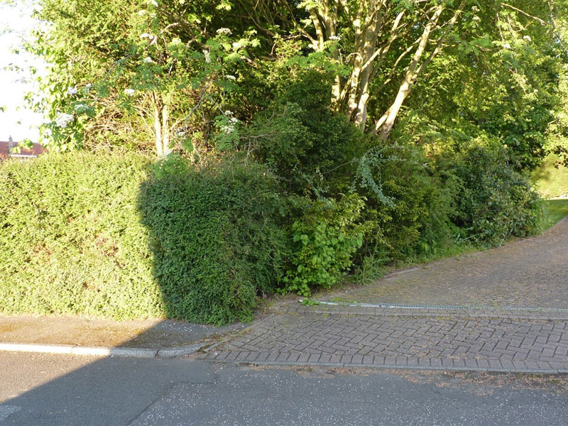 Mixed hedging is wonderful for wildlife