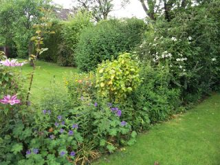 Hedging can be anywhere in your garden, not just the boundary