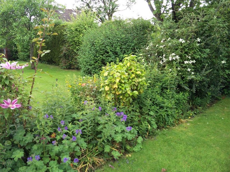 A native hedge can be anywhere in your garden, not just the boundary