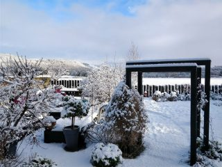 Gardens can still be interesting in winter