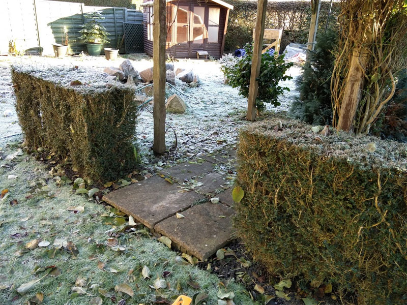 A native hedge can provide year round interest