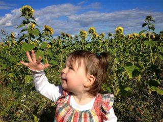 A host of golden...sunflowers!