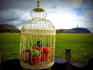 The upcycled bird cage is a great place to display alpines