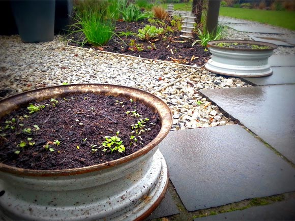 The old rims were planted with wildlife friendly flowers