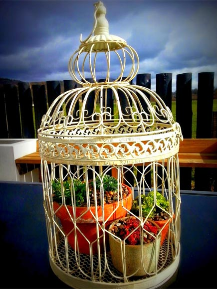 Some pretty pots and alpines give this pretty bird cage a new purpose in life