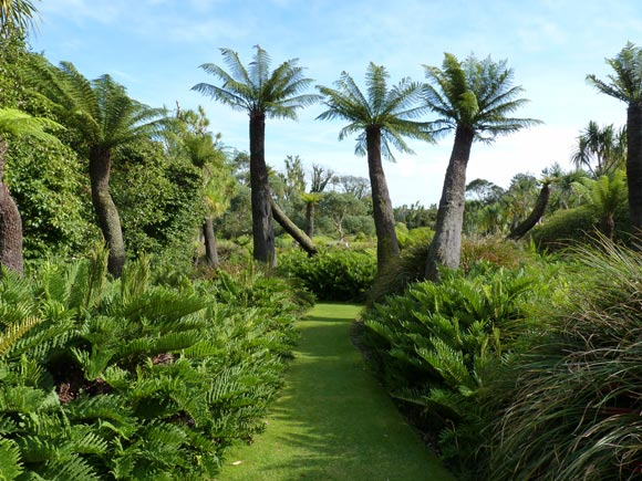 The almost Jurassic tree ferns at Logan Botanic Gardens