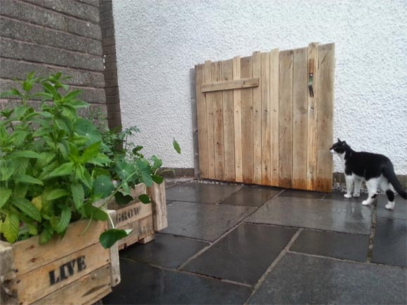 Jingles the cat inspects the new pallet gate