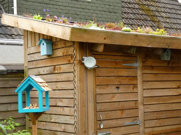The new shed and bird table