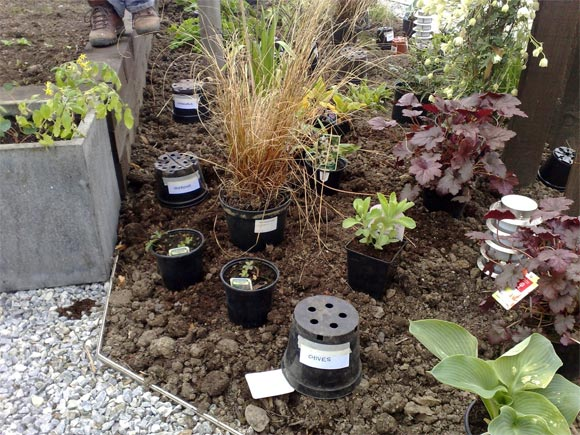 Planting starts to take shape