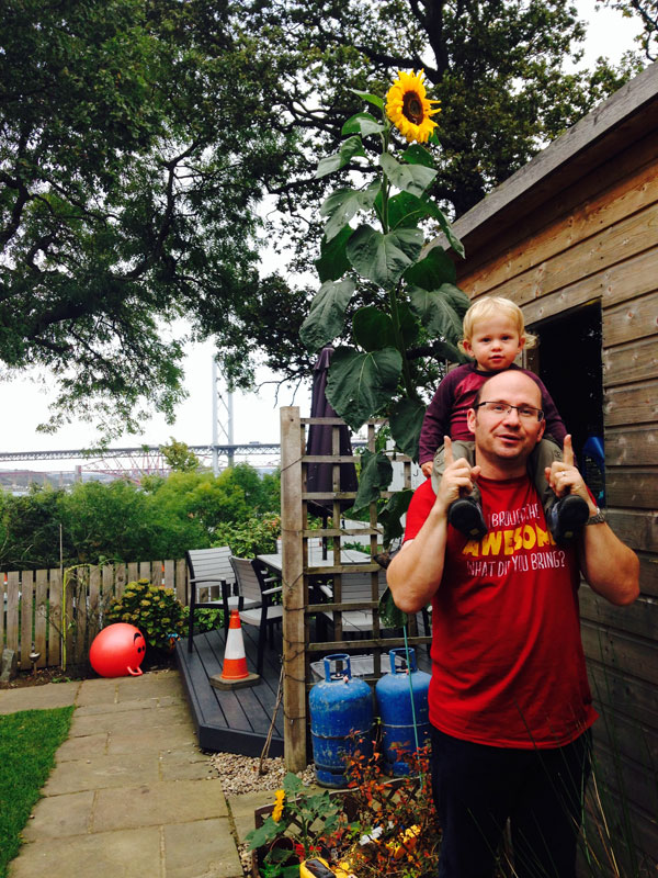 Ollie and the winning sunflower