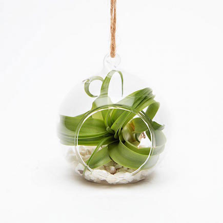 The beautiful Epiphyte seasonal terrarium