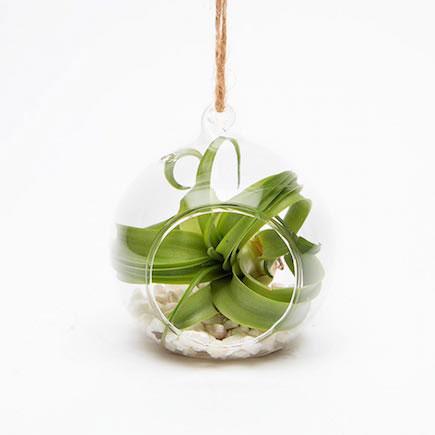 The beautiful Epiphyte seasonal terrarium