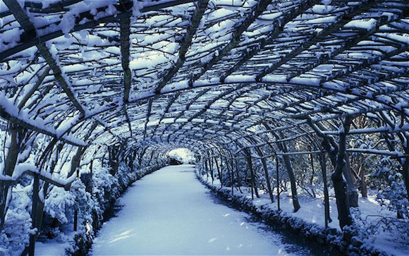 The Bodnant laburnum arch looks equally inviting in the snow