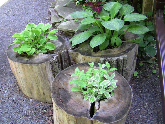 These would look great in a rustic garden
