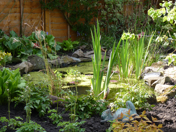 The pond we built in this Edinburgh garden is a haven for wildlife