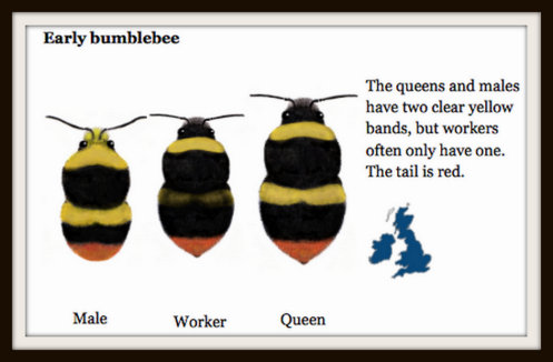 """Early Bumblebees"" are one of the most common types you can see in your garden"