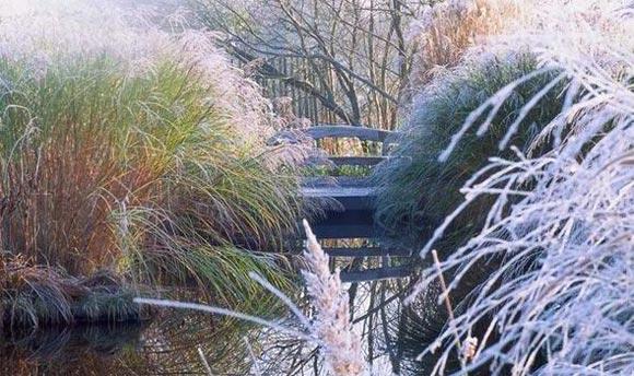 Grasses in a winter garden
