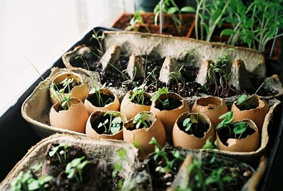 Even egg shells can be used to grow seeds