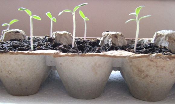 Egg cartons are a brilliant alternative to seed trays