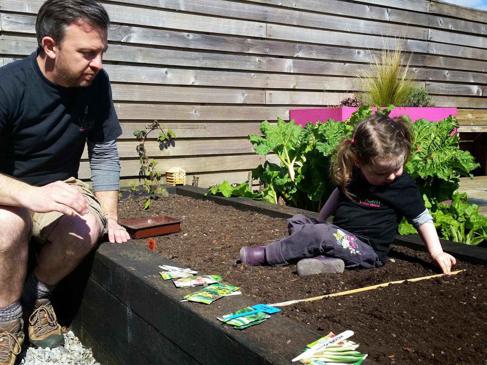 Prep your soil then sow your seeds in a nice neat row