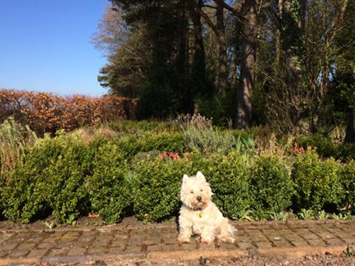 Monty in the garden