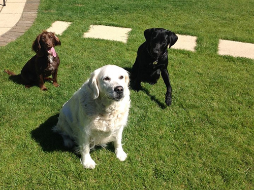 Ruby has Holly and Lottie over for a play in her garden