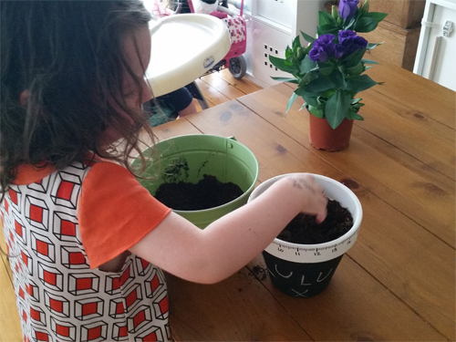 Carefully add compost and your plant