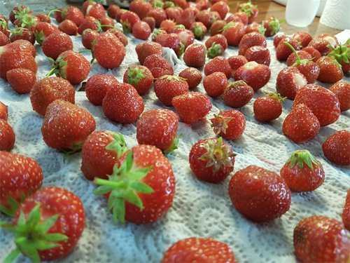 Make sure your strawberries are left to dry before putting them away