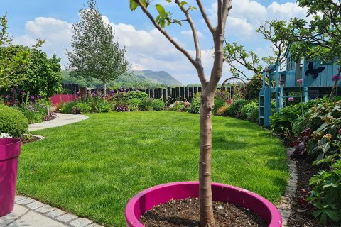 View across our garden