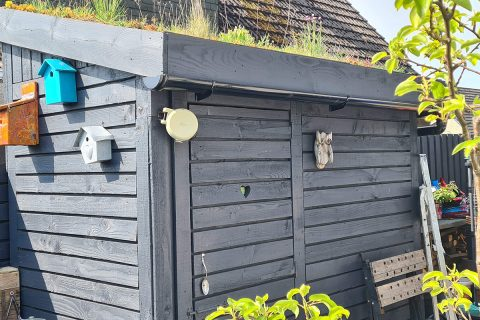Our pallet shed with a living roof