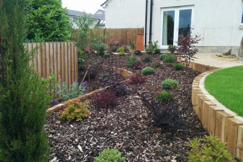 Planting softens the terracing