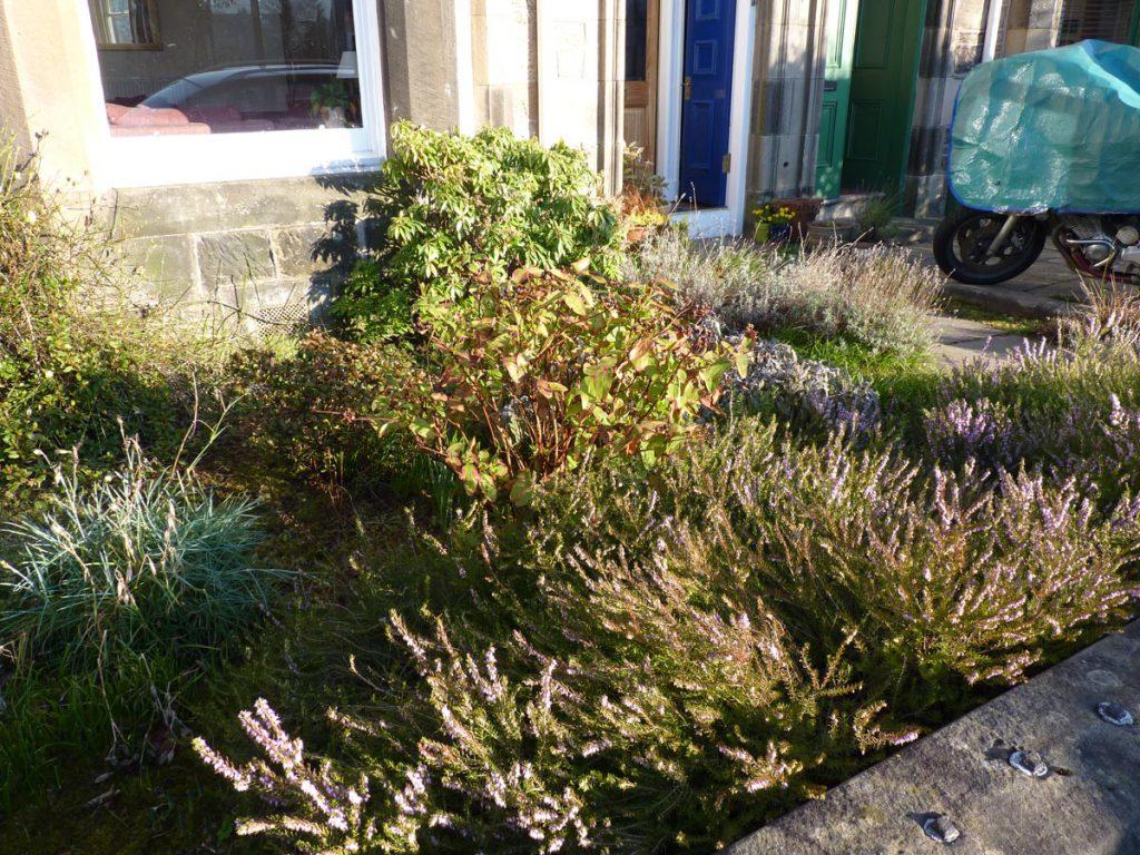 Before: the garden was overgrown