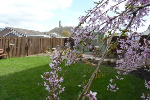 View through the cherry blossom to Wallace Monument