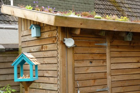 The pallet shed with a living roof